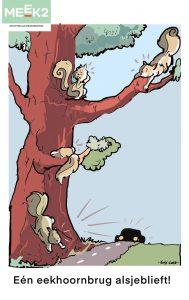 Eekhoornbrug en sociale netwerk versterking